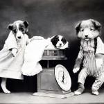 dog-316991_640[1]